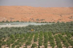 UAE-Agriculture